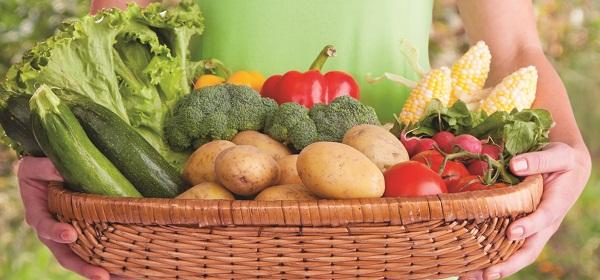 Garden for Vegetables